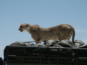 30-01-03-TA-Serengeti.jpg