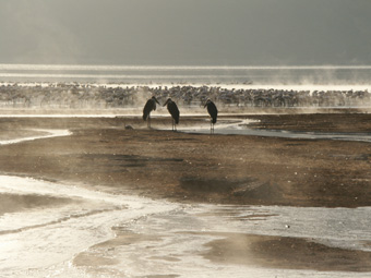 9-02-03-KE-Bogoria.jpg