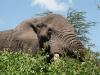 30-01-03-TA-Ngorongoro.jpg