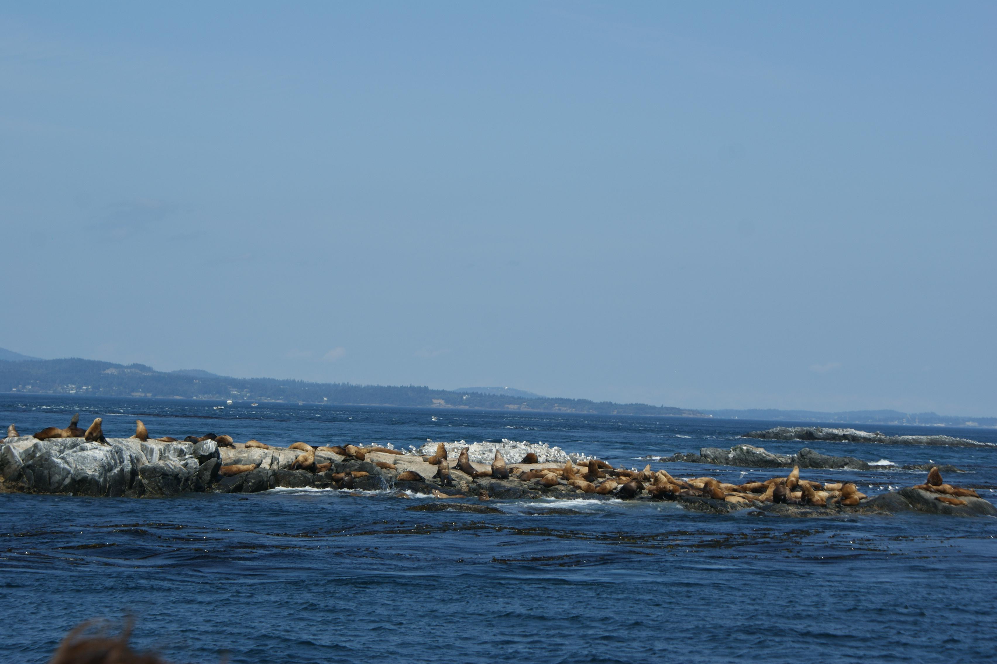 Seals Victoria