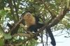Costa Rica Parce National Carara
