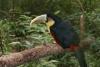 Vogelpark Puerto Iguazu Argentinien